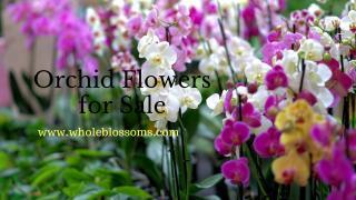 orchid flower.pdf